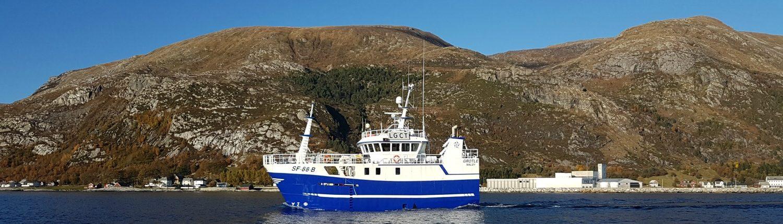 MS Grotle - Havstjerna